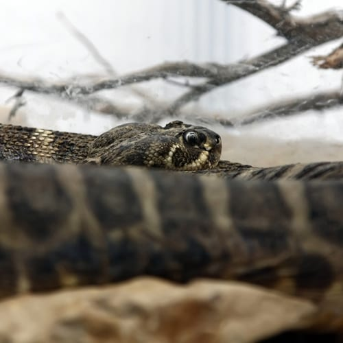 A snake with venom that can kill in 30 minutes was recently identified in Scotland on a cargo vessel.