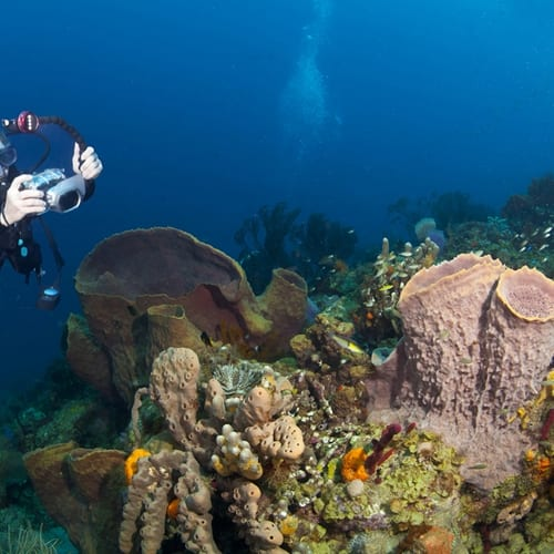 Commercial diving may just be job you were born to do.