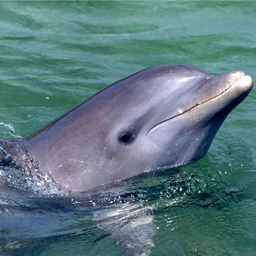 A whale of an experience: Dolphins and whales can leave boats significantly damaged